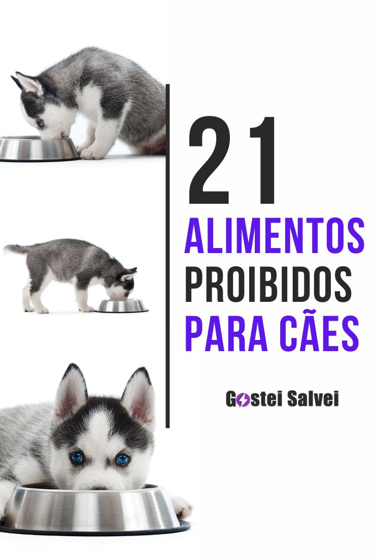 21 Alimentos proibidos para cães