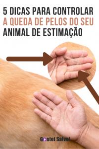 5 Dicas para controlar a queda de pelos do seu animal de estimação