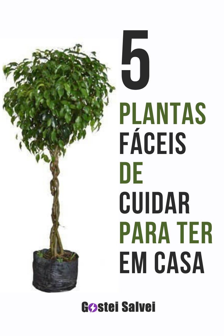 5 Plantas fáceis de cuidar para ter em casa