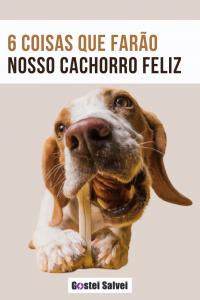 6 Coisas que farão nosso cachorro feliz