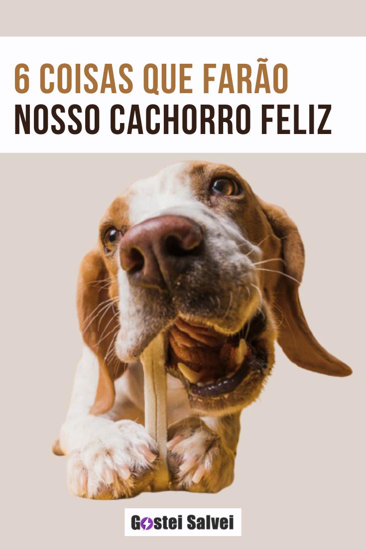 You are currently viewing 6 Coisas que farão nosso cachorro feliz