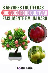 8 Árvores frutíferas que você pode cultivar facilmente em um vaso