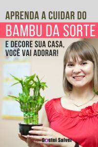 Aprenda a cuidar do bambu da sorte e decore sua casa, você vai adorar!