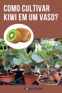 Como cultivar Kiwi em um vaso?