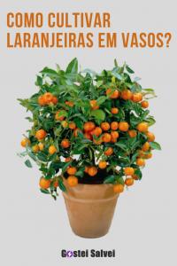 Como cultivar laranjeiras em vasos?