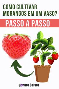 Como cultivar morangos em um vaso? Passo a passo