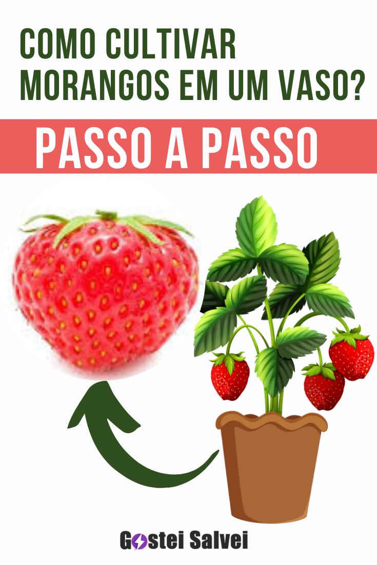 You are currently viewing Como cultivar morangos em um vaso? Passo a passo