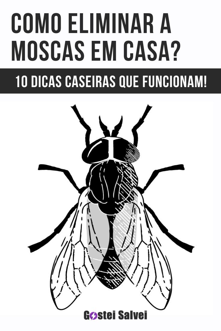 Como eliminar a moscas em casa? 10 Dicas caseiras que funcionam!