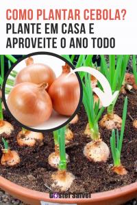 Como plantar cebola? Plante em casa e aproveite o ano todo