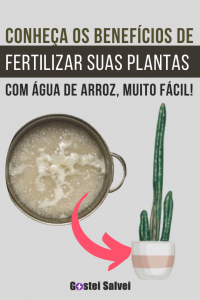 Conheça os benefícios de fertilizar suas plantas com água de arroz, muito fácil!