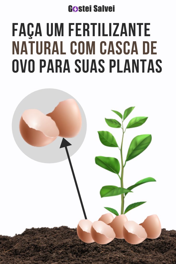Faça um fertilizante natural com casca de ovo para suas plantas