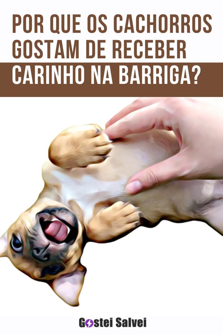 Por que os cachorros gostam de receber carinho na barriga?