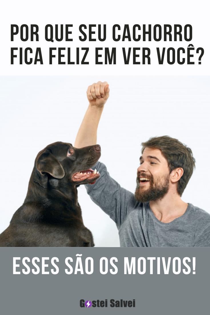 Por que seu cachorro fica feliz em ver você? Esses são os motivos!