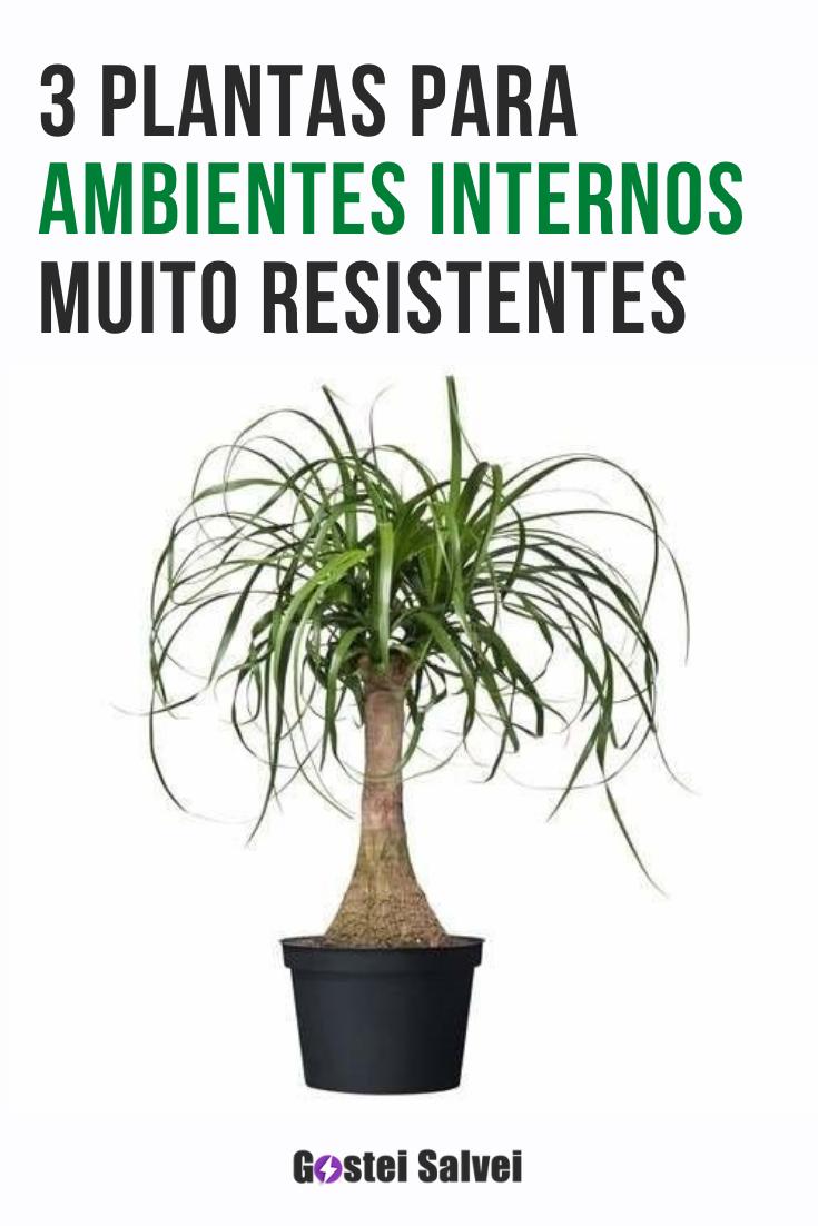You are currently viewing 3 Plantas para ambientes internos muito resistentes