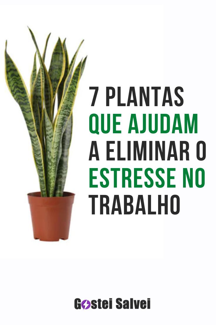7 Plantas que ajudam a eliminar o estresse no trabalho
