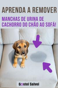 Read more about the article Aprenda a remover manchas de urina de cachorro do chão ao sofá!