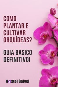 Como plantar e cultivar orquídeas? Guia básico definitivo!