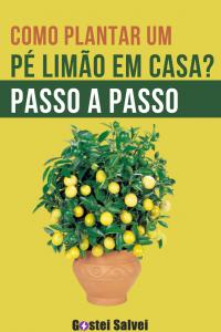 Como plantar um pé limão em casa? Passo a passo
