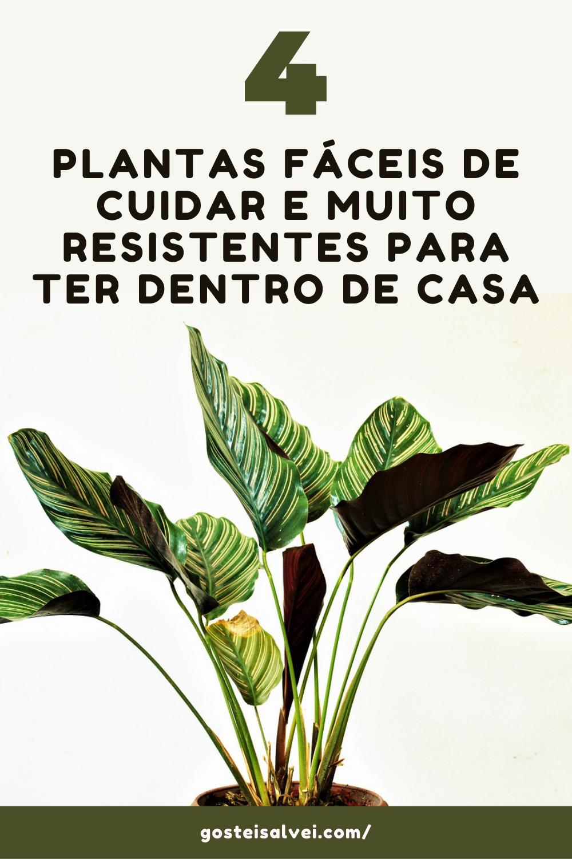 4 Plantas fáceis de cuidar e muito resistentes para ter dentro de casa