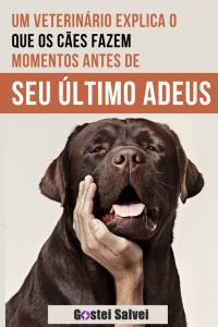 Read more about the article Um veterinário explica o que os cães fazem momentos antes de dizerem seu último adeus