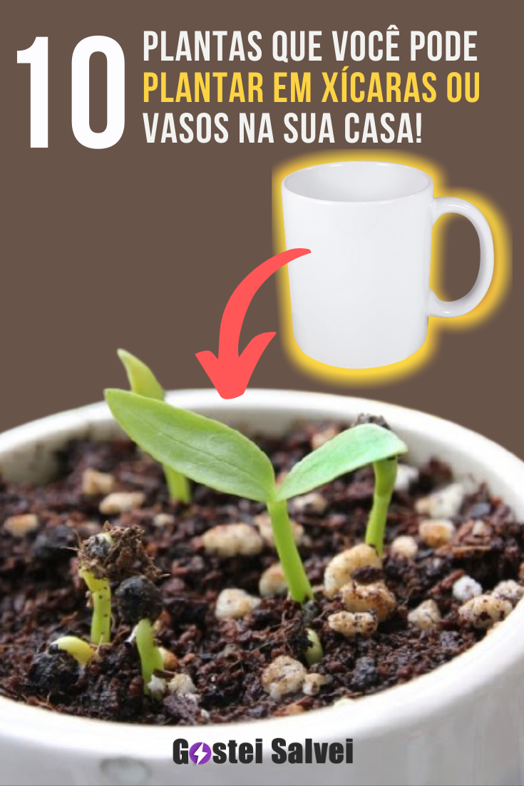 10 Plantas que você pode plantar em xícaras ou vasos na sua casa!