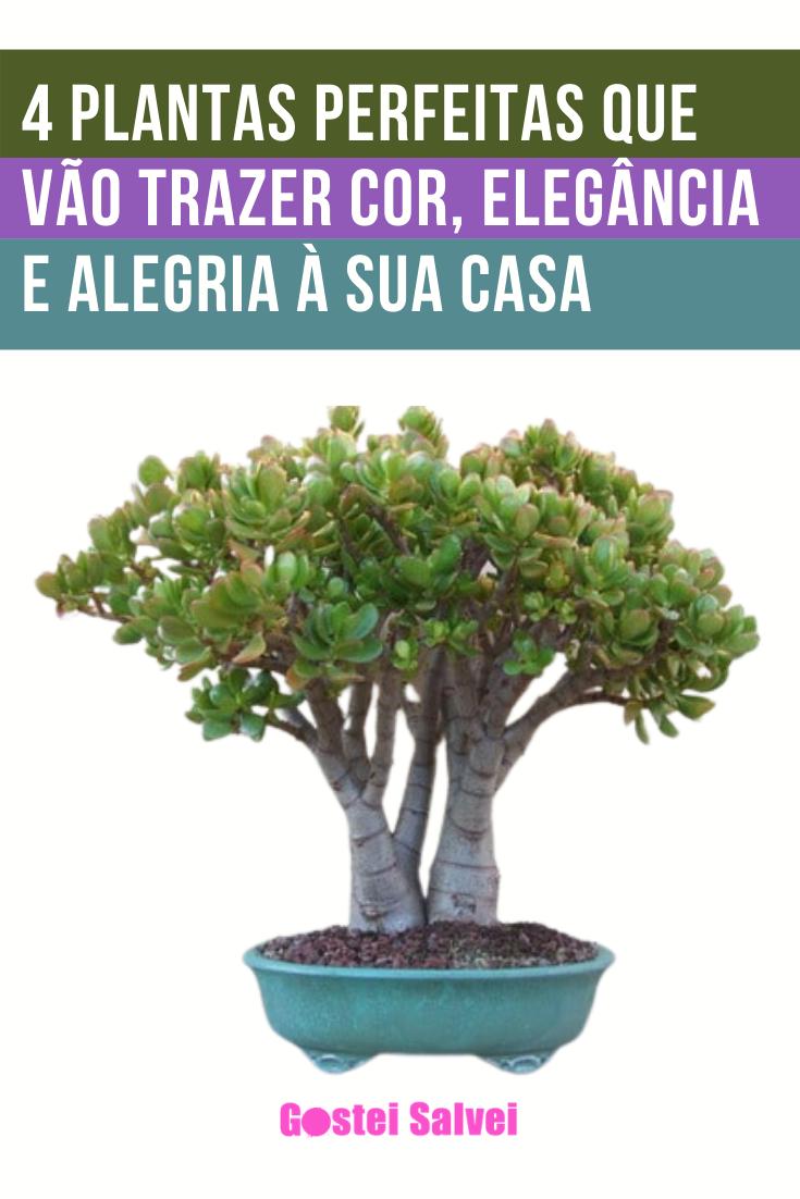 4 Plantas perfeitas que vão trazer cor, elegância e alegria à sua casa