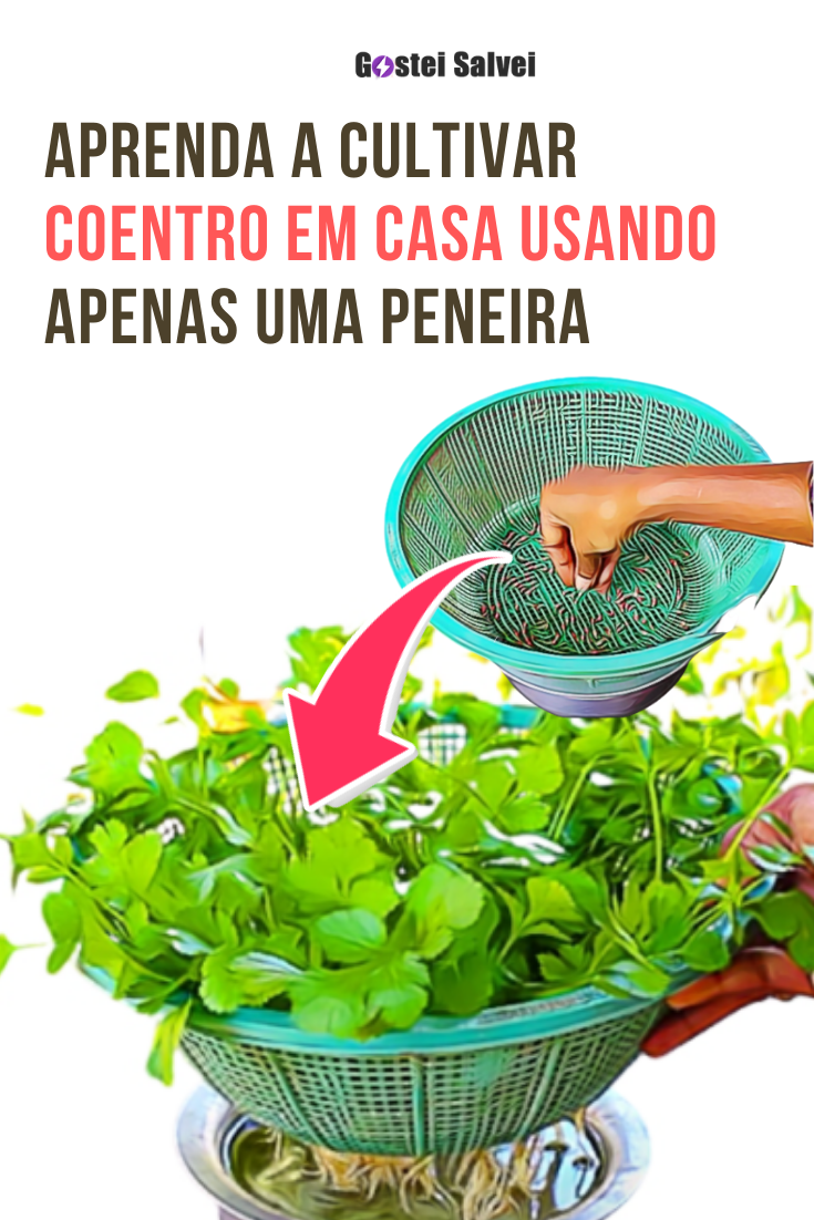 Aprenda a cultivar coentro em casa usando apenas uma peneira