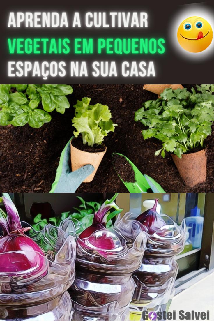 Aprenda a cultivar vegetais em pequenos espaços na sua casa