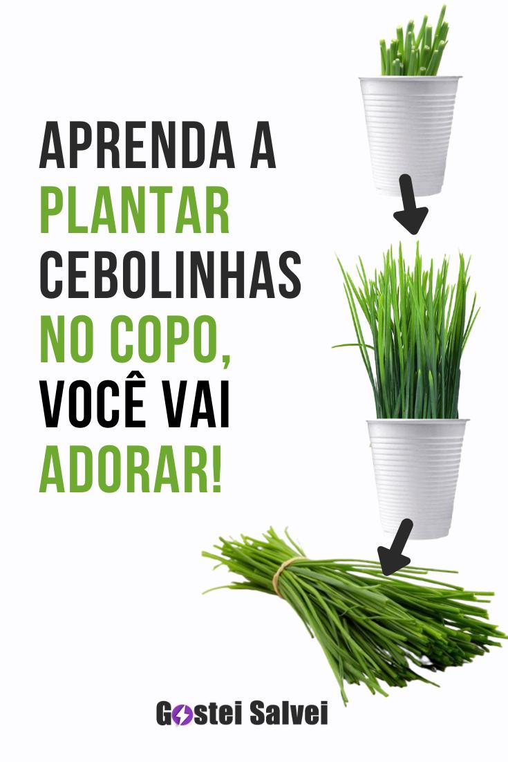 Aprenda a plantar cebolinha no copo, você vai adorar!