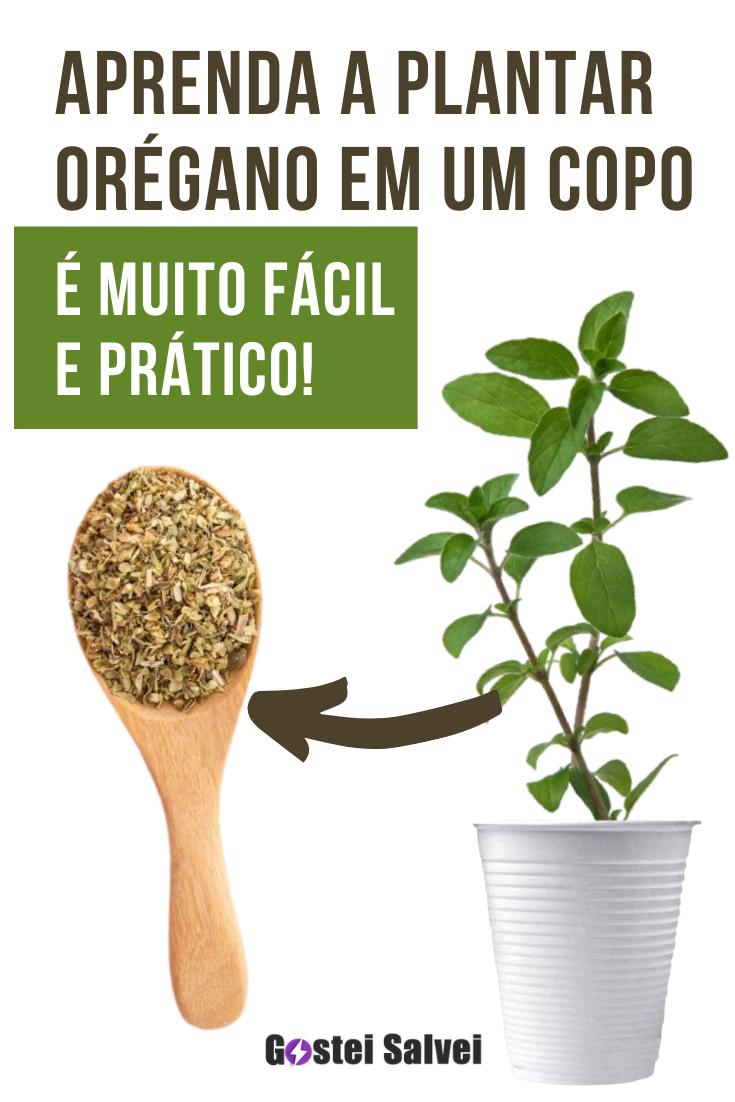 You are currently viewing Aprenda a plantar orégano em um copo, é muito fácil e prático!
