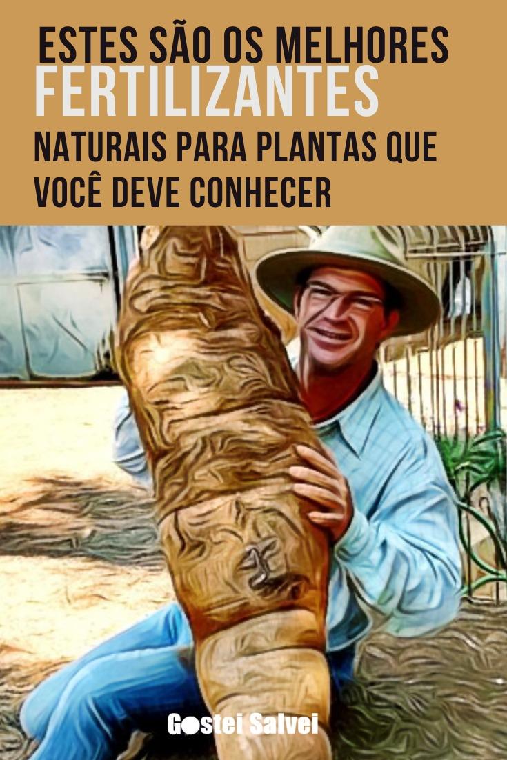 You are currently viewing Estes são os melhores fertilizantes naturais para plantas que você deve conhecer