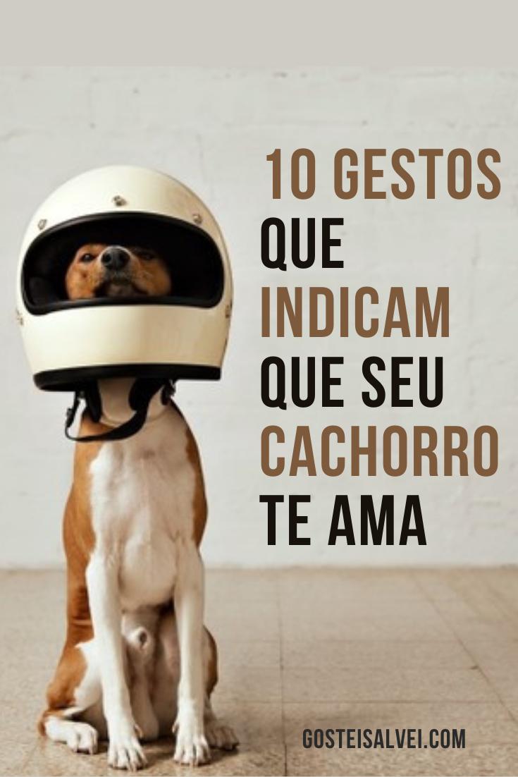 You are currently viewing 10 Gestos que indicam que seu cachorro te ama