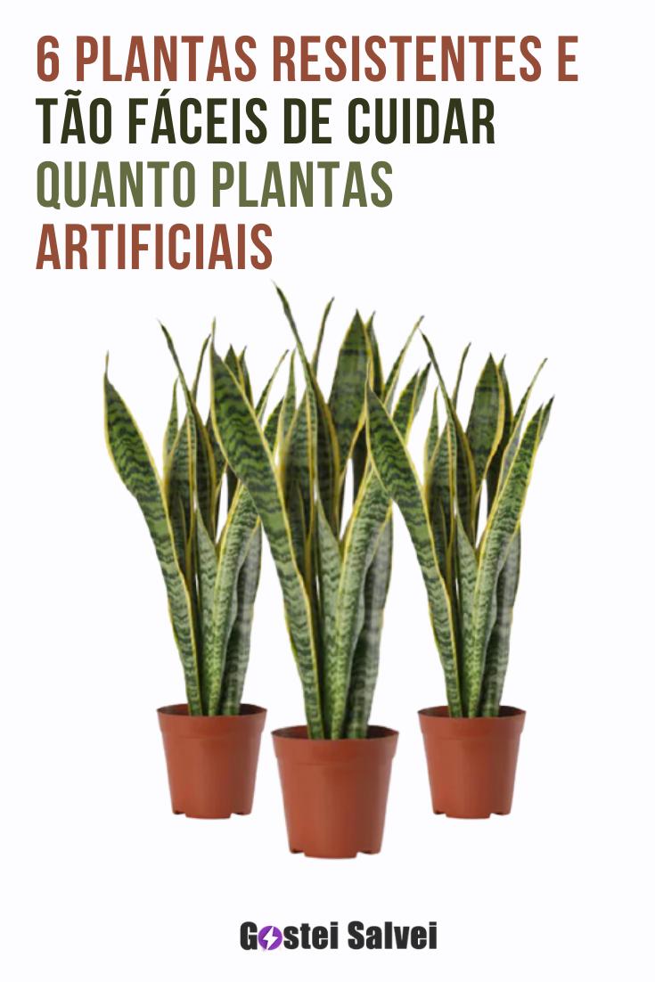 You are currently viewing 6 Plantas resistentes e tão fáceis de cuidar quanto plantas artificiais
