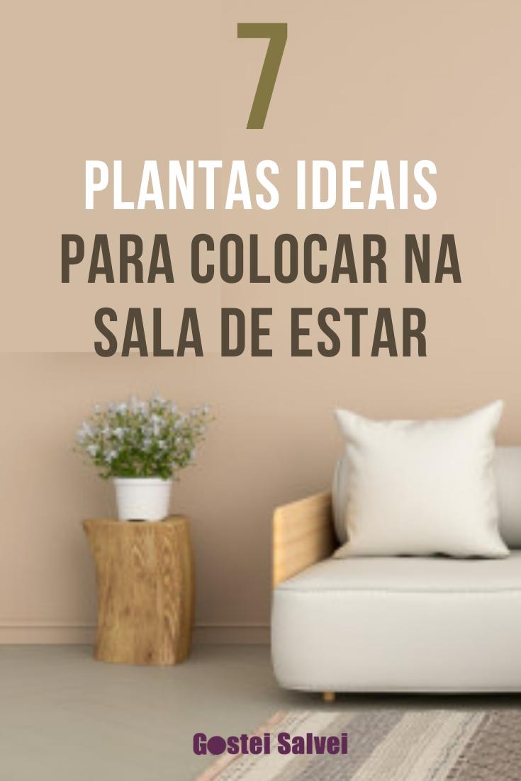 You are currently viewing 7 Plantas ideais para colocar na sala de estar