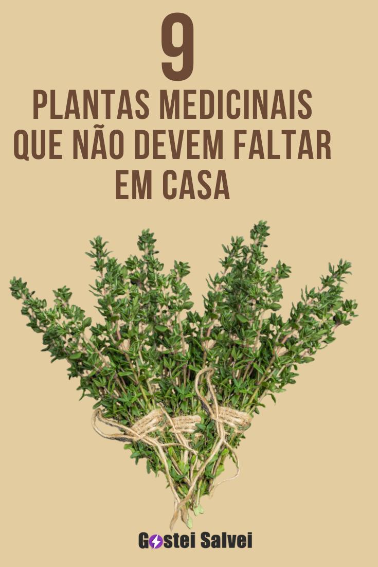9 Plantas medicinais que não devem faltar em casa