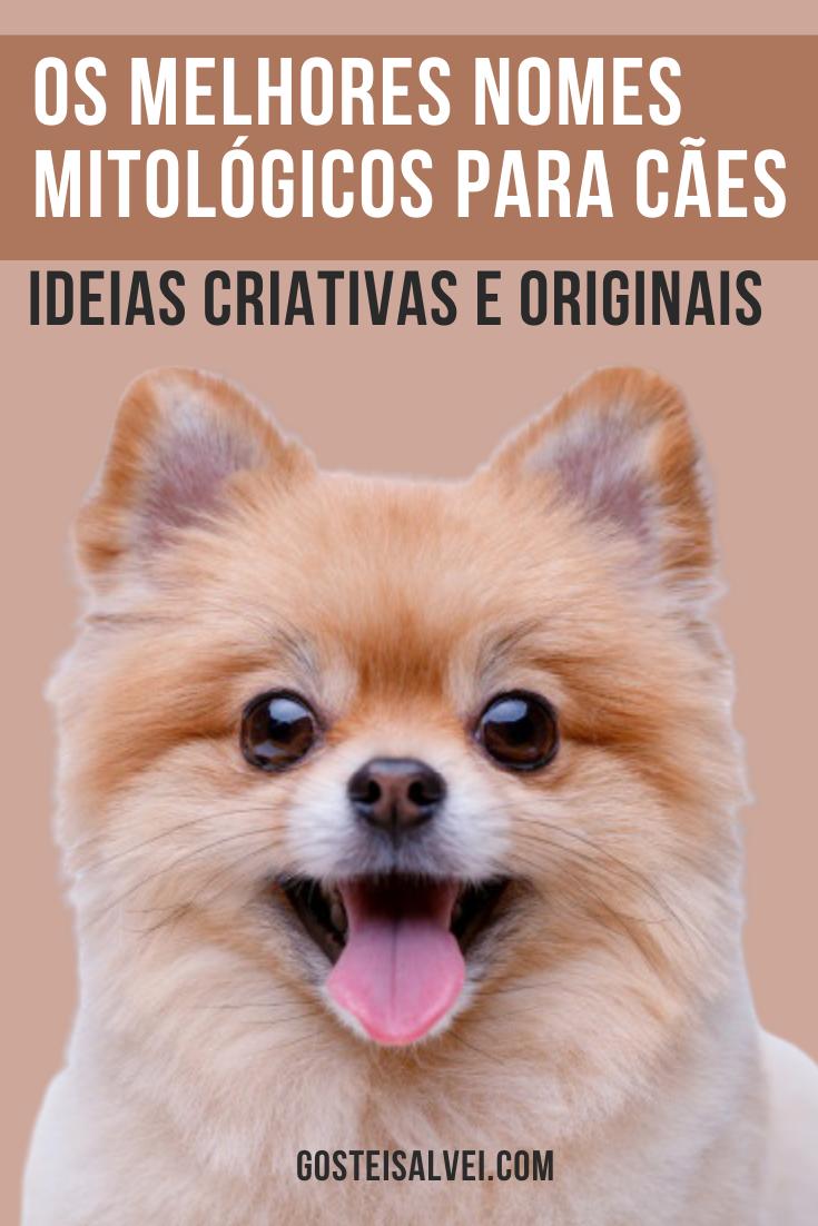 Os melhores nomes mitológicos para cães (Ideias criativas e originais)