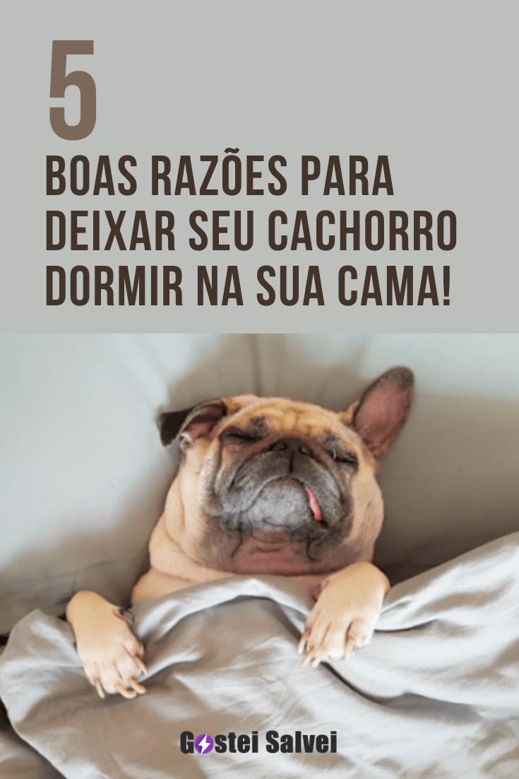 5 Boas razões para deixar seu cachorro dormir na sua cama!