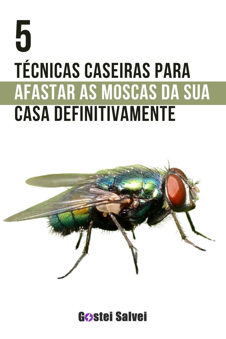 You are currently viewing 5 Técnicas caseiras para afastar as moscas da sua casa de uma vez por todas!