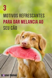 Read more about the article 3 Motivos refrescantes para dar melancia ao seu cão