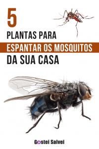 5 Melhores plantas para espantar os mosquitos da sua casa
