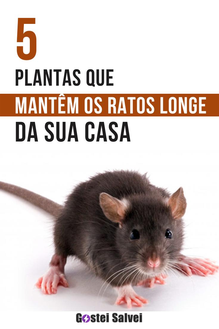 5 Plantas que mantêm os ratos longe da sua casa