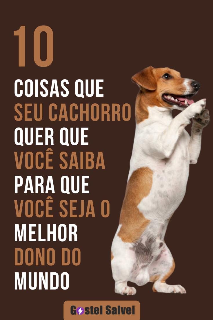 10 Coisas que seu cachorro quer que você saiba para que você seja o melhor dono do mundo