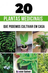 20 Plantas medicinais que podemos cultivar em casa