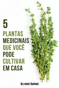 5 Plantas medicinais que você pode cultivar em casa