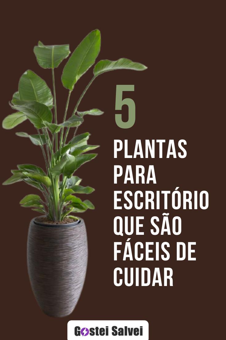 5 Plantas para escritório que são fáceis de cuidar