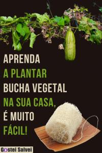 Aprenda a plantar bucha vegetal na sua casa, é muito fácil!