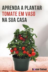 Aprenda a plantar tomate em vaso na sua casa