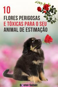 10 Flores perigosas e TÓXICAS para o seu animal de estimação