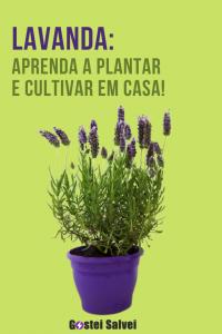 Lavanda: Aprenda a plantar e cultivar em casa!
