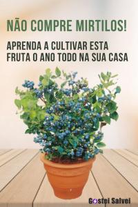 Não compre mirtilos! Aprenda a cultivar esta fruta o ano todo na sua casa